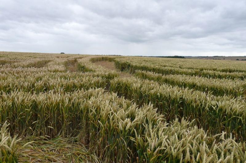 Crops circles 4 P1030610