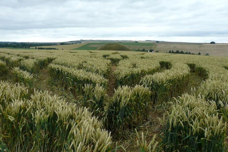 Crops circles 4 P1030613