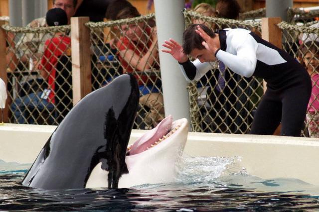 [photo] Comparaisons  impressionnantes orques / humains 57142910