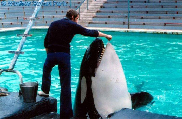 [photo] Comparaisons  impressionnantes orques / humains - Page 4 Winsto10