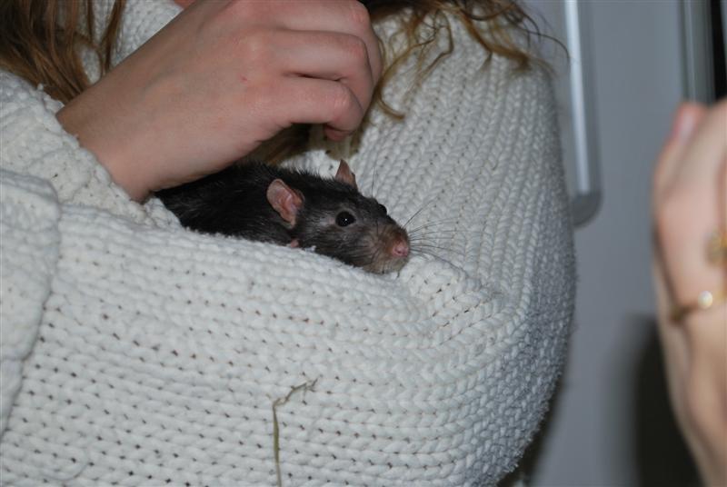 Durex (rat) refuge FREE Durex10
