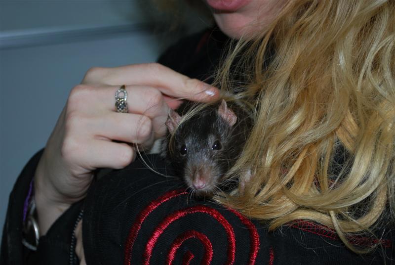 Durex (rat) refuge FREE Durex_10