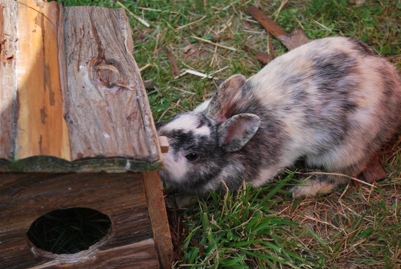 Full Tommy et Little (lapins) refuge FREE 77 Full310