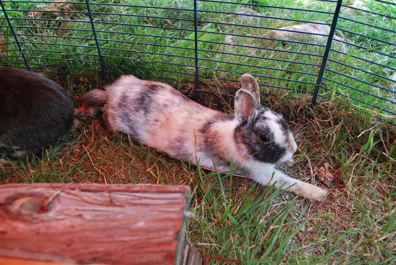 Full Tommy et Little (lapins) refuge FREE 77 Full411
