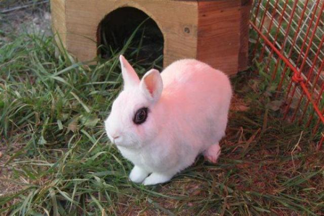 Loula et Jamsin(lapin) refuge FREE Jasmin11