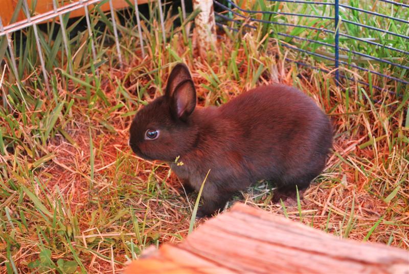 Full Tommy et Little (lapins) refuge FREE 77 Little10