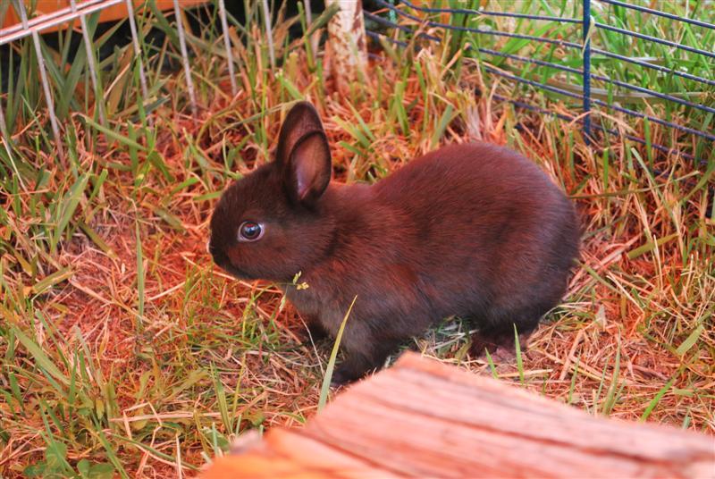 Full Tommy et Little (lapins) refuge FREE 77 Little11