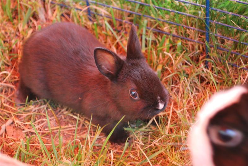 Full Tommy et Little (lapins) refuge FREE 77 Little12