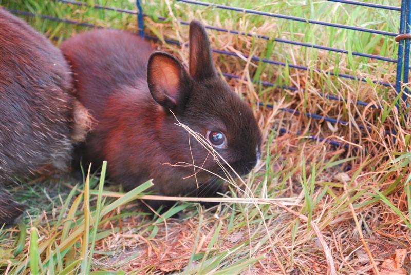 Full Tommy et Little (lapins) refuge FREE 77 Little13