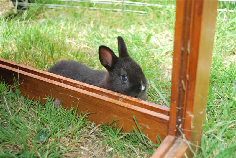Full Tommy et Little (lapins) refuge FREE 77 Little14