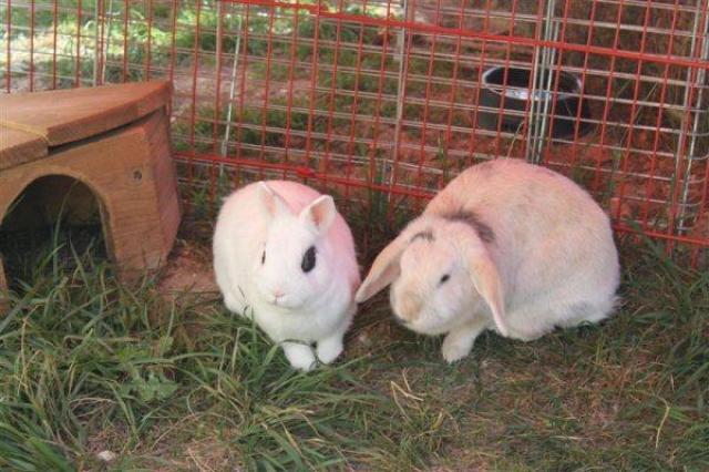Loula et Jamsin(lapin) refuge FREE Loula_10