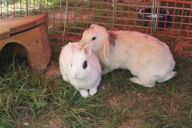 Loula et Jamsin(lapin) refuge FREE Loula_11