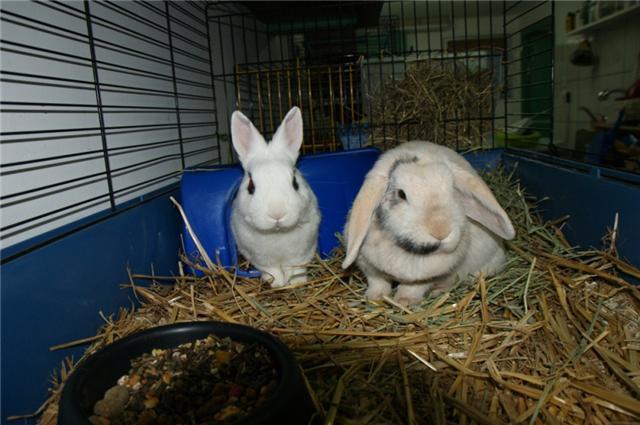 Loula et Jamsin(lapin) refuge FREE Loula_12