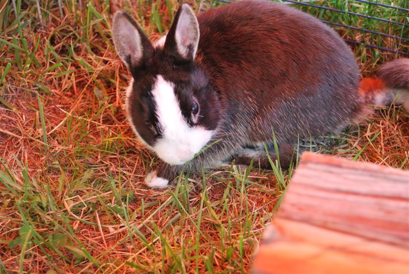 Full Tommy et Little (lapins) refuge FREE 77 Tommy210