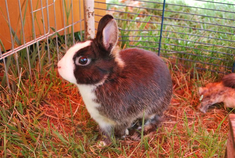 Full Tommy et Little (lapins) refuge FREE 77 Tommy310
