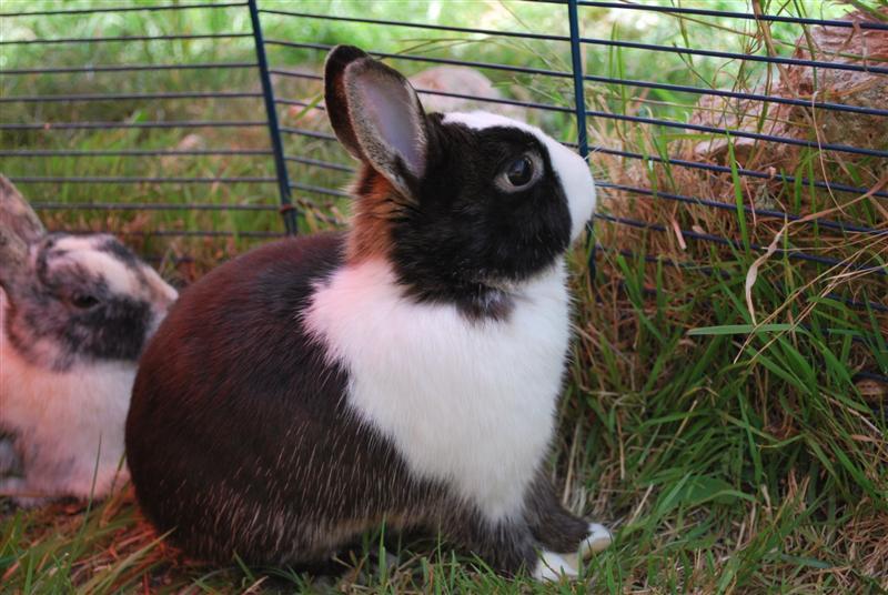 Full Tommy et Little (lapins) refuge FREE 77 Tommy410