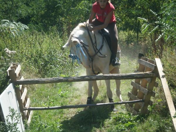 Vos plus belles grimaces de cheval et photos gag .... - Page 5 25863110