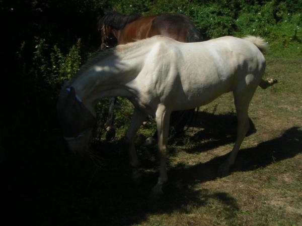 Vos plus belles grimaces de cheval et photos gag .... - Page 5 25863710