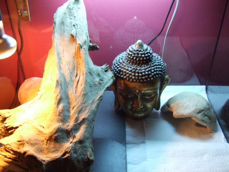 Mon premier terrarium Dscf1510