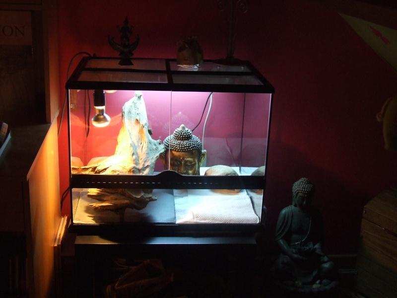 Mon premier terrarium Dscf1512