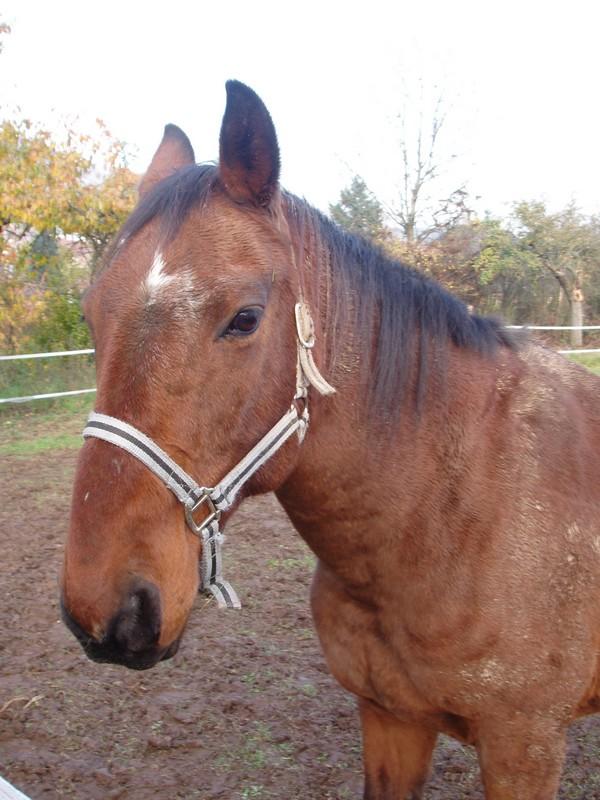 propose poney pour rando Felix10