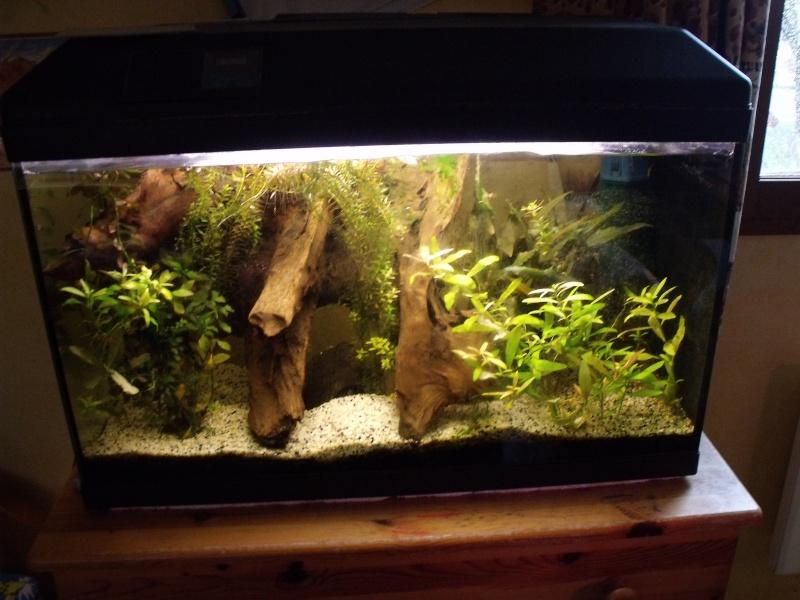 70 litres Pelvicachromis Pulcher Dscf1010