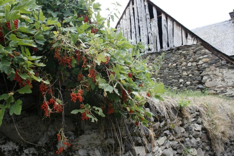 Les Pyrénées _mg_3610