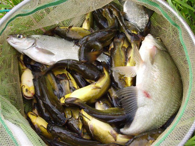 La pêche du poisson chat par Matouny 68 - Page 2 Pict0014