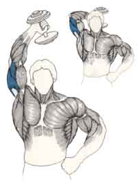 L'extension verticale de l'avant-bras avec haltère Exttri11