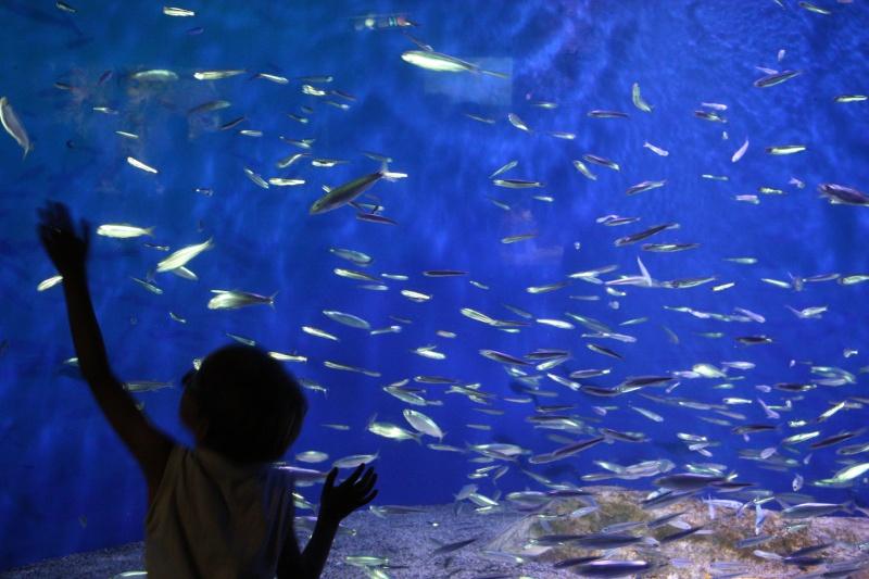 Aquarium de La Rochelle Img_8110