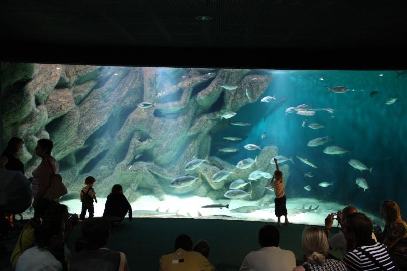 Aquarium de La Rochelle Img_8115