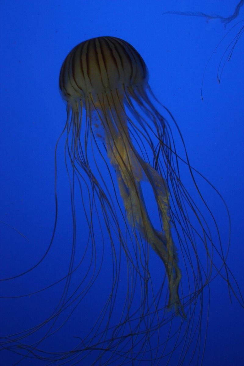 Aquarium de La Rochelle Img_8210