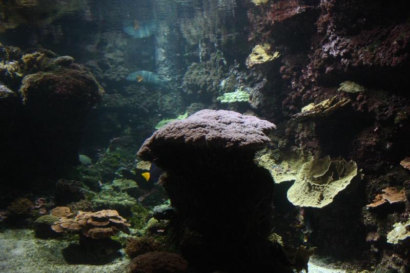 Aquarium de La Rochelle Img_8212