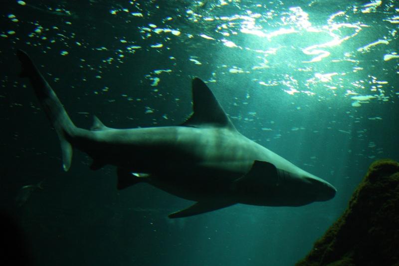 Aquarium de La Rochelle Img_8213