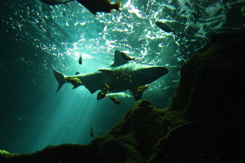 Aquarium de La Rochelle Img_8214