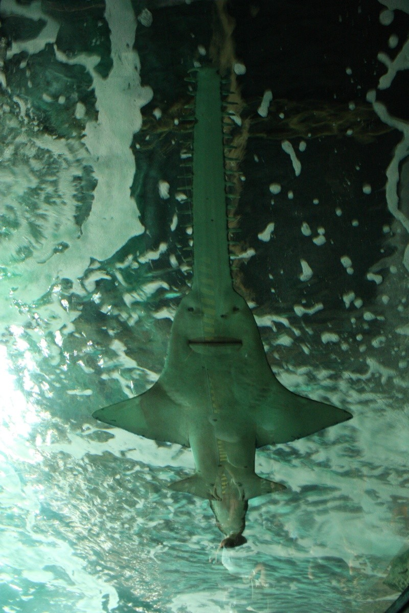 Aquarium de La Rochelle Img_8311