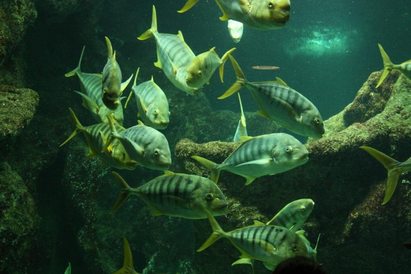 Aquarium de La Rochelle Img_8312