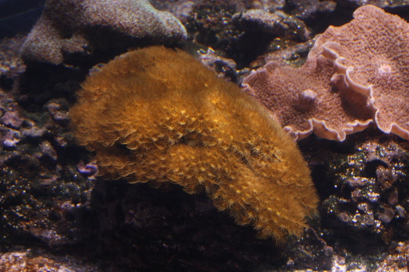 Aquarium de La Rochelle Img_8313
