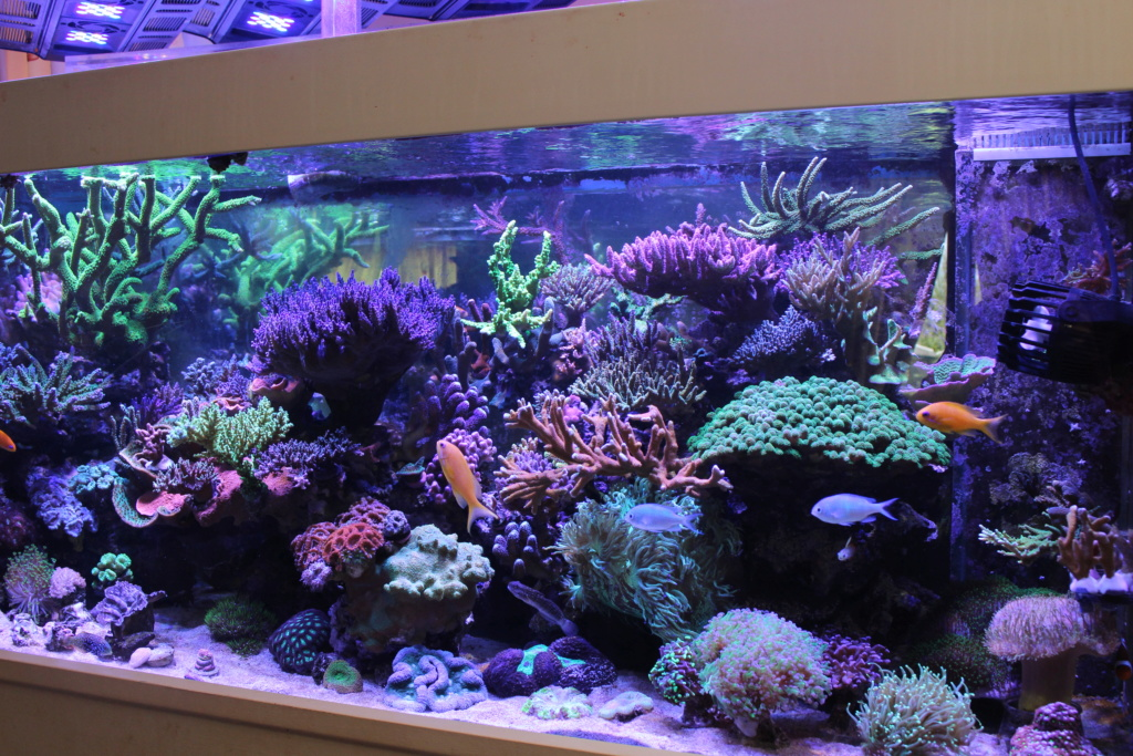 THE BILLY'S REEF - Page 40 Img_1628
