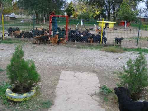 Refuge de Becej et Djurdjevo (Serbie) Refuge14