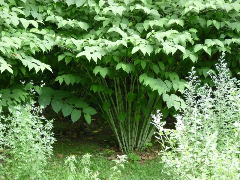 buisson à identifier Parc_d29