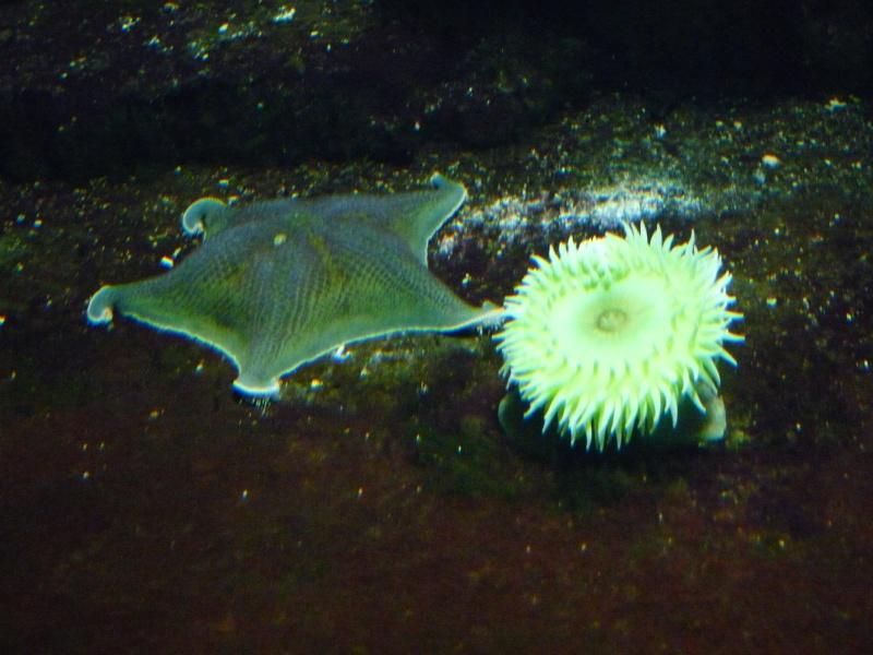 étoile de mer à Wilhelma Parc_w14