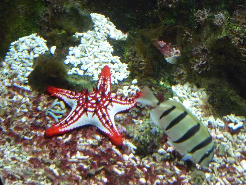 re étoile de mer au Wilhelma Parc_w15