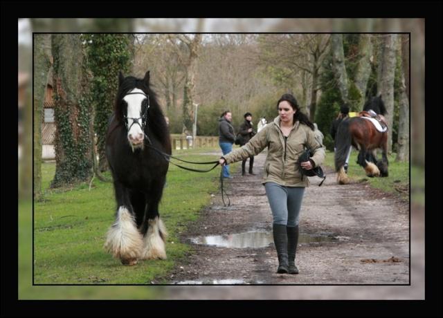 Une photo de vous et votre cheval - Page 2 Haras_10