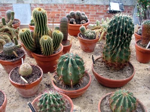 S.O.S Plantes dépolluantes ! 20080111
