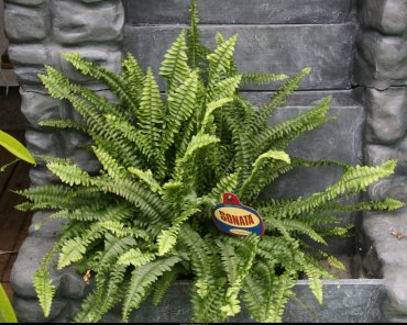 S.O.S Plantes dépolluantes ! Fouger10