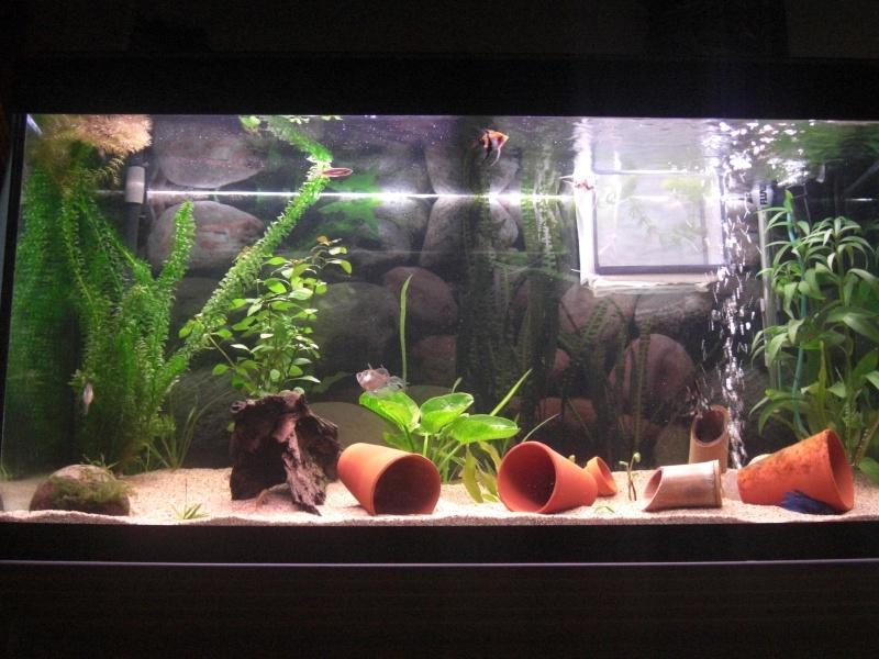 Aquarium  200 litres de zitoum Cimg2012