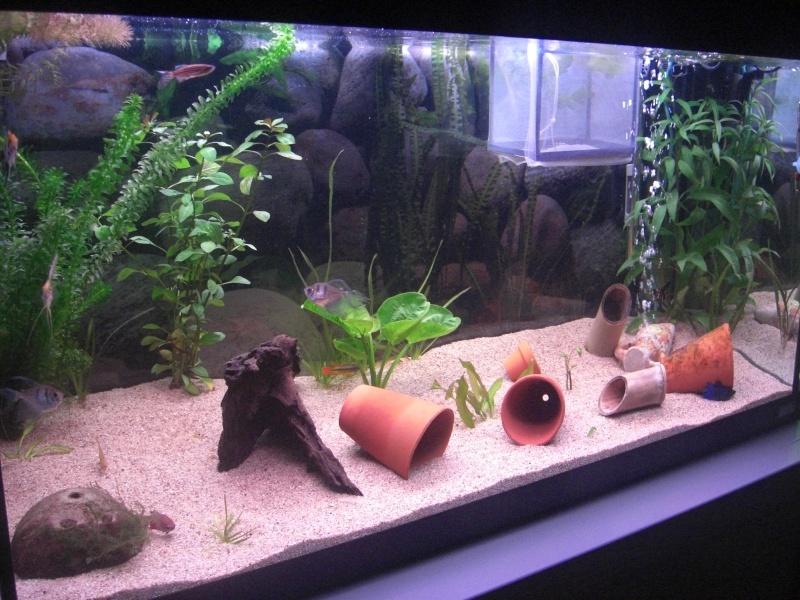 Aquarium  200 litres de zitoum Cimg2013