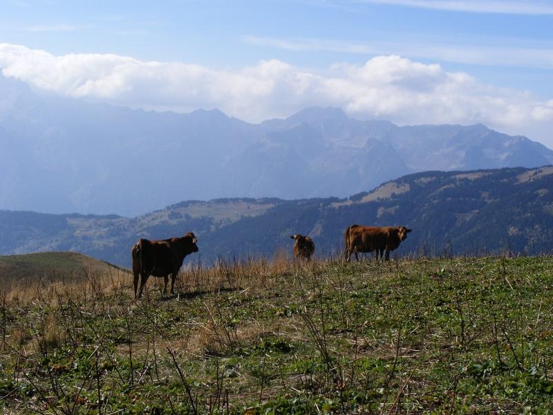 Exploitation laitière Savoie (73) Dscf0716