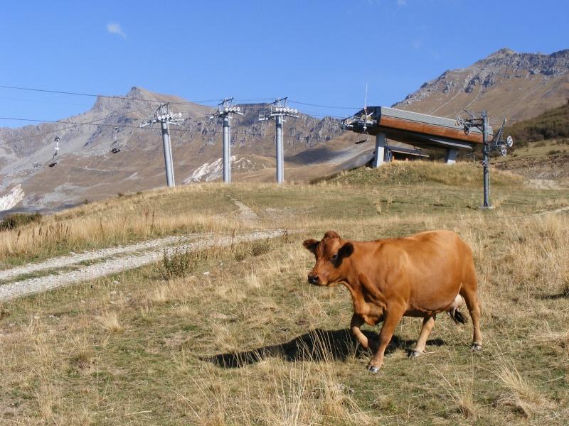 Exploitation laitière Savoie (73) Dscf0717